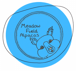 Meadow Field Alpacas